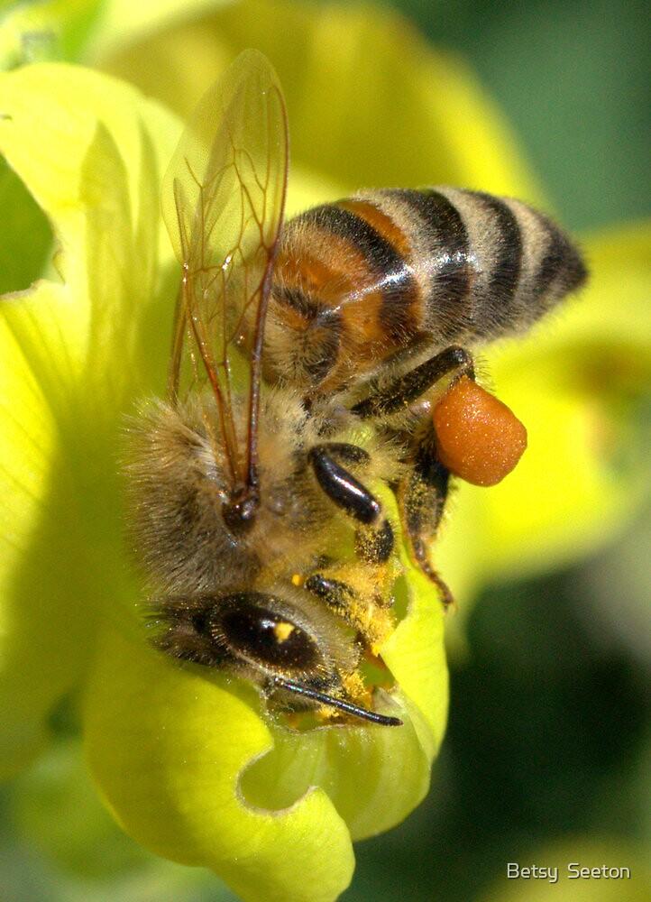 HONEY BEE by Betsy  Seeton