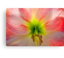 Nick's Signature Macro Canvas Print