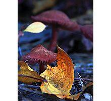 Mushroom Kingdom (4322) Photographic Print