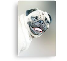 Winston - pug portrait :) Canvas Print