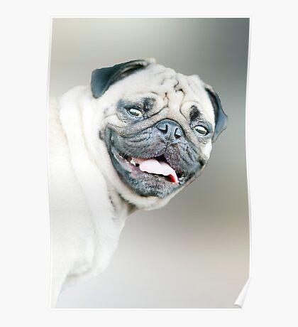Winston - pug portrait :) Poster