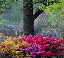 Early Morning Azaleas by bannercgtl10