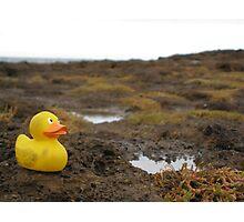 Duckscovering Rock Pools Photographic Print