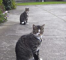Identical cats by AmandaWitt
