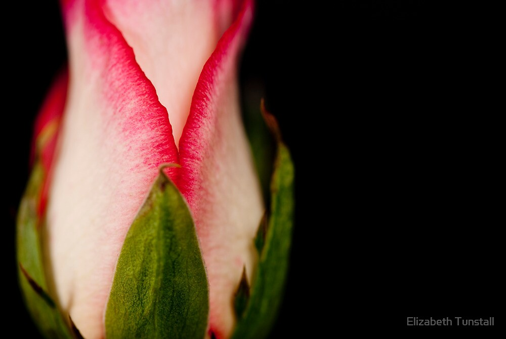 Black and Pink by Elizabeth Tunstall