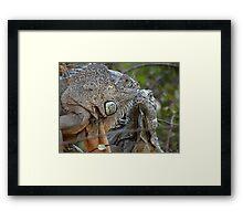 Nice To Meet You - Me Gusta Verte Framed Print