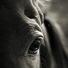 Gentle Soul by Carol Knudsen