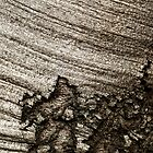 Tree Bark with Gnarled and Ribbed Features by Michael Deeble