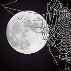 The Web by Steve Adams