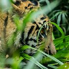 Hidden crouching tiger by Luke Kliman