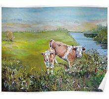 Cows and Calf eating from a hedge standing in a field on the bank of a river with distant hills Poster