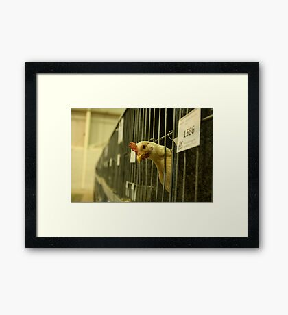 Chicken not Chicken Framed Print