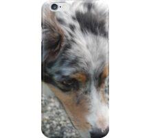 Australian Shepherd 2 iPhone Case/Skin