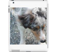 Australian Shepherd 2 iPad Case/Skin