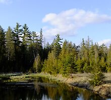 Spring At The Beaver Pond by Tracy Wazny