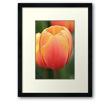 Keukenhof Tulip Framed Print