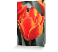 hot colours Greeting Card