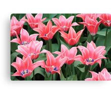 pink group Canvas Print