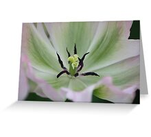 tulip center Greeting Card