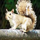 Mississippi Squirrel by Terri Chandler