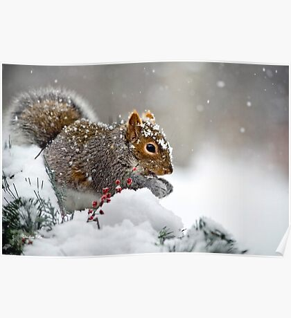 Snowy Squirrel Poster