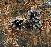 Three Pinecones in a Tree by TCbyT