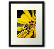 Yellow Sunflower and Bee Framed Print