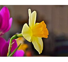 Daffodil Paintography Photographic Print