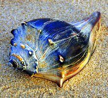 Seashell by Eva  Ason