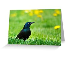 Black Bird Greeting Card
