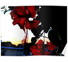 Dark Hibiscus Poster