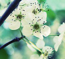 Teal Garden by Shannon Ferguson