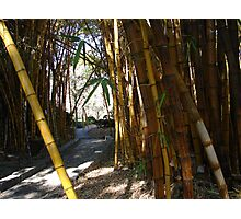 A path in the bamboo forest Photographic Print