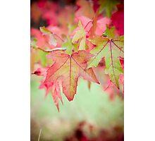 Autumn Leaves II Photographic Print