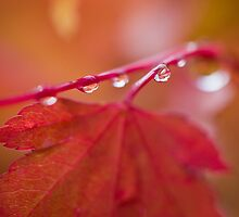 Autumn Leave III by Kelly Slater