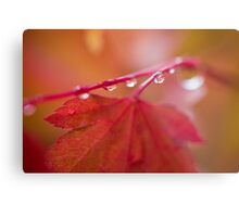 Autumn Leave III Metal Print