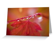 Autumn Leave III Greeting Card