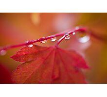 Autumn Leave III Photographic Print
