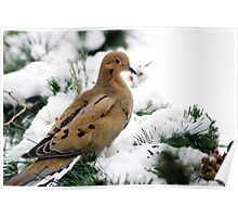 Holiday Dove Poster
