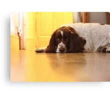 Lonely Dog Canvas Print