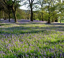 Bluebell Woods, Ilkley, Yorkshire by Jim Round
