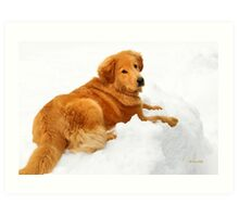 Golden Retriever in Snow Art Print