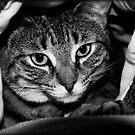 Blanket Cave by jodi payne