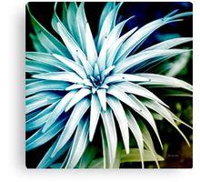 Blue Spiral Plant Abstract Canvas Print