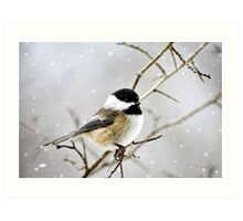 Snowy Chickadee Bird Art Print