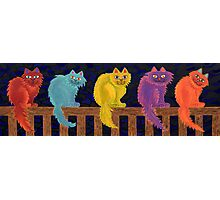 Fence Cats Photographic Print