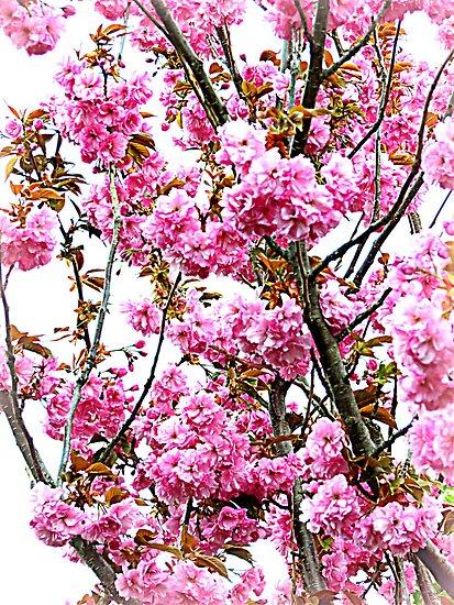 April Blooms by kkphoto1