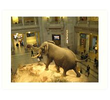 Museum of Natural History rotunda Art Print