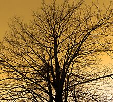 The Sunset Tree by peter Jensen