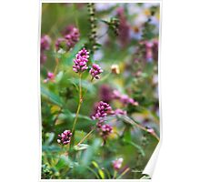 Pink Smartweed Flowers Poster
